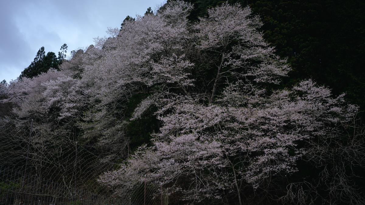 f:id:daitai_Iro:20210413221449j:plain