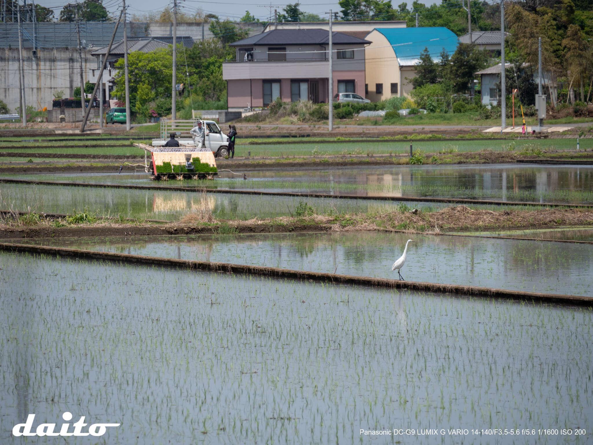 f:id:daito-a110:20190505135907j:plain