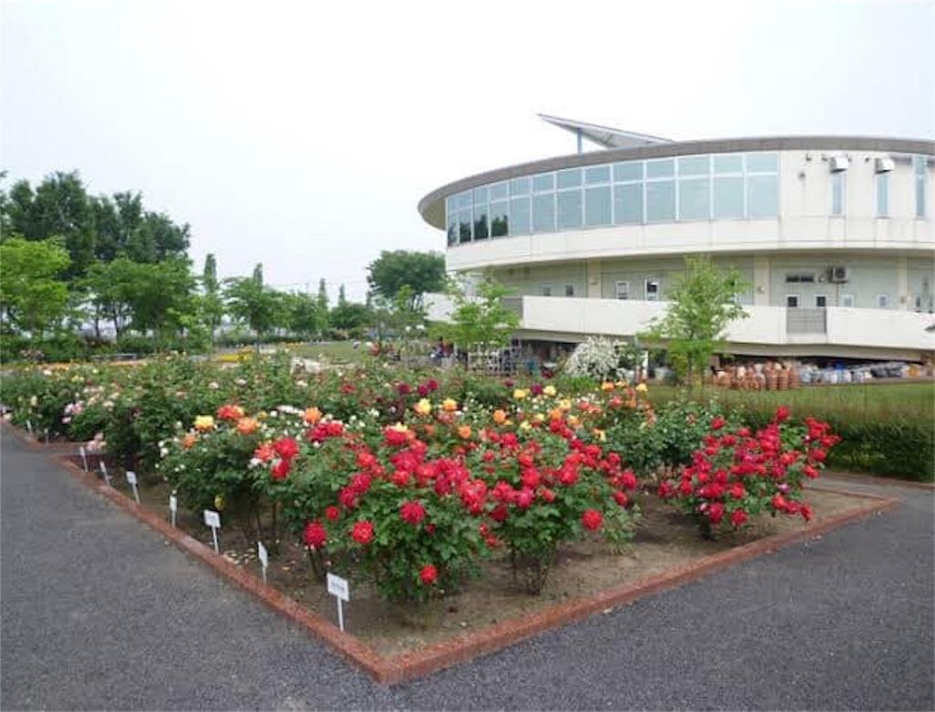 f:id:daizumonogatari:20190628055841j:image