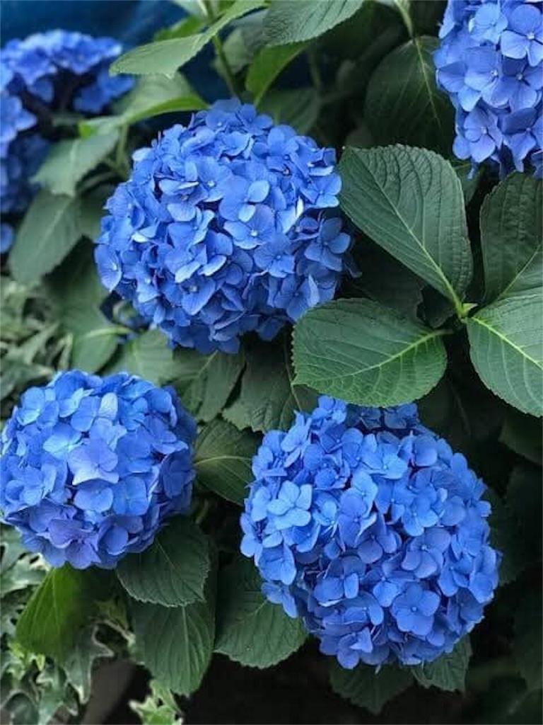 f:id:daizumonogatari:20190701061252j:image