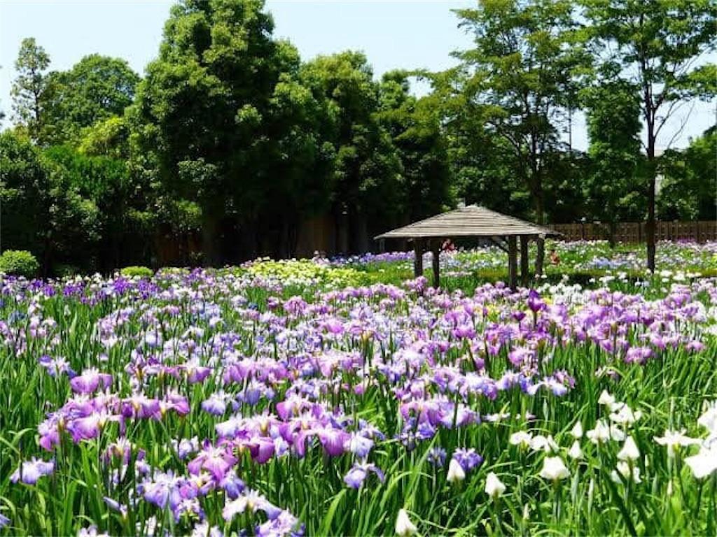 f:id:daizumonogatari:20190713194224j:image