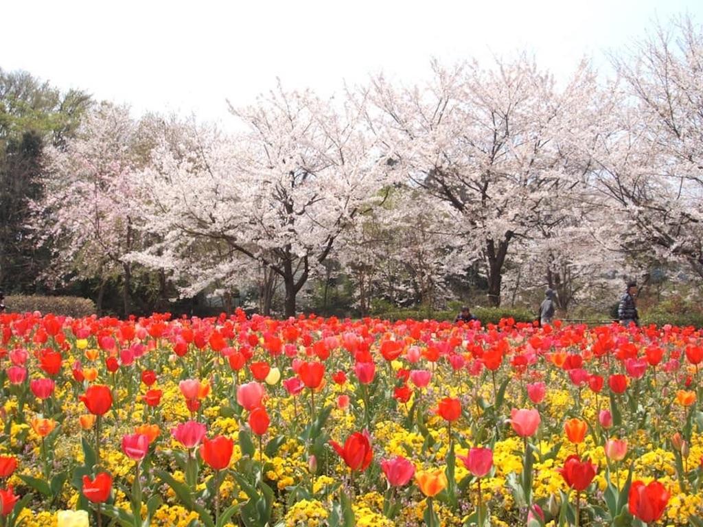 f:id:daizumonogatari:20190719222953j:image