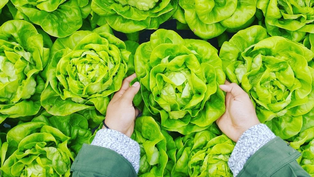 農業には体力だけでなく知力や技術力も必要。