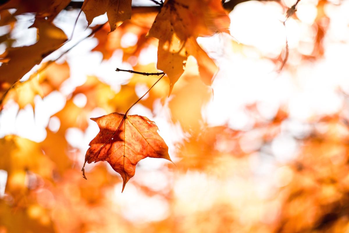 紅葉シーズンです。