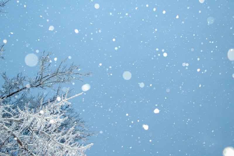 雪を見たかった・・・