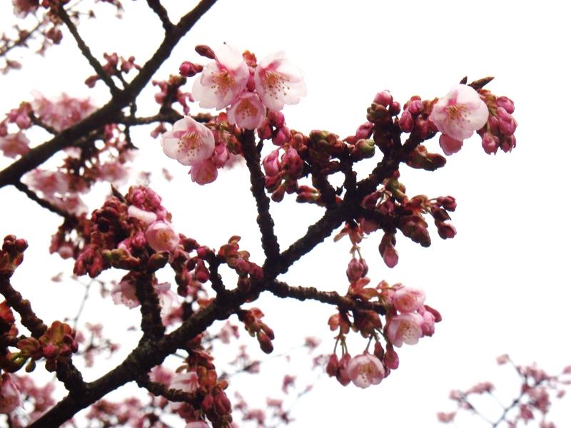 f:id:dancingbrave1986:20110124093035j:image