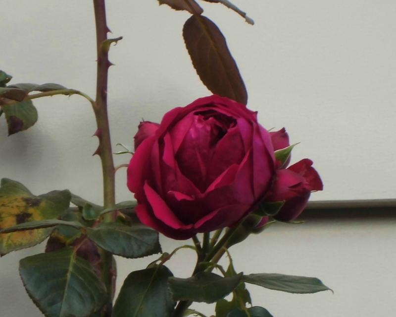 f:id:dancingbrave1986:20121112131441j:image