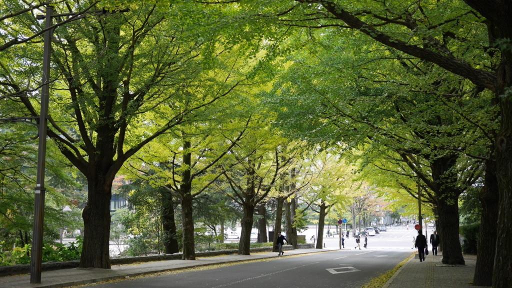 まだ緑が多い銀杏並木