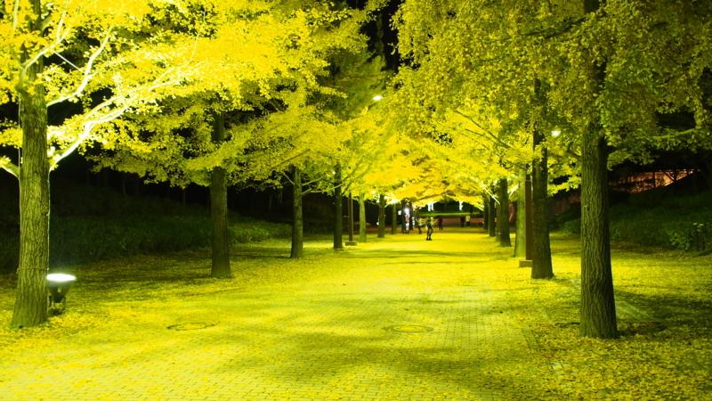 夜のイチョウ並木斜めから