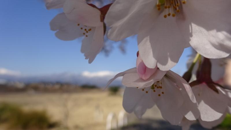 花を大きく撮った画像