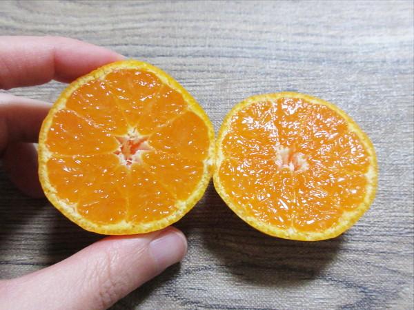 【柑橘の断面図】西宇和みかん