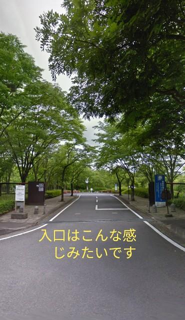 f:id:dansuzuki:20190301131917j:image