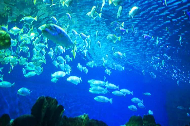 クアラルンプール水族館