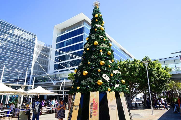シドニー 夏のクリスマスツリー