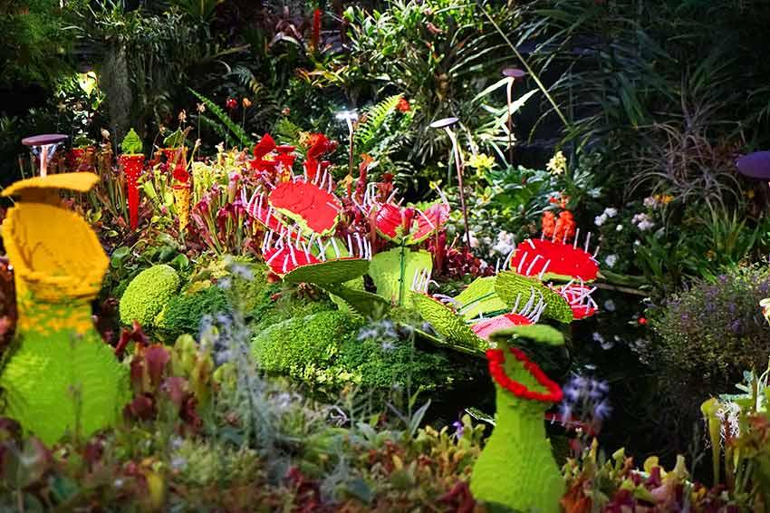 食虫植物アート