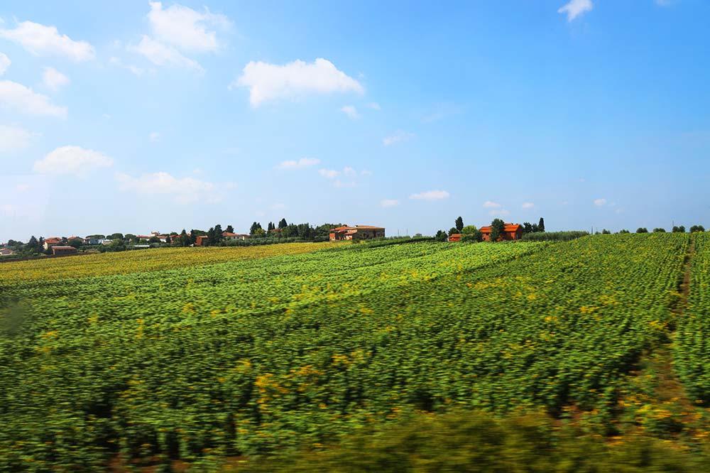 イタリア 葡萄畑