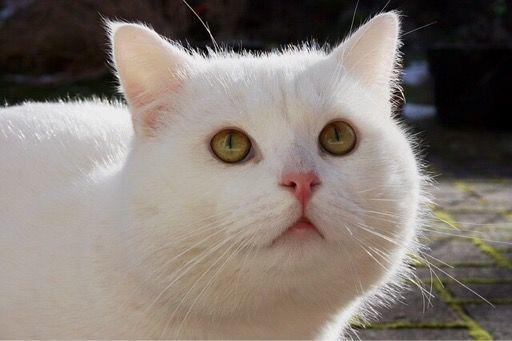 白ネコちゃん