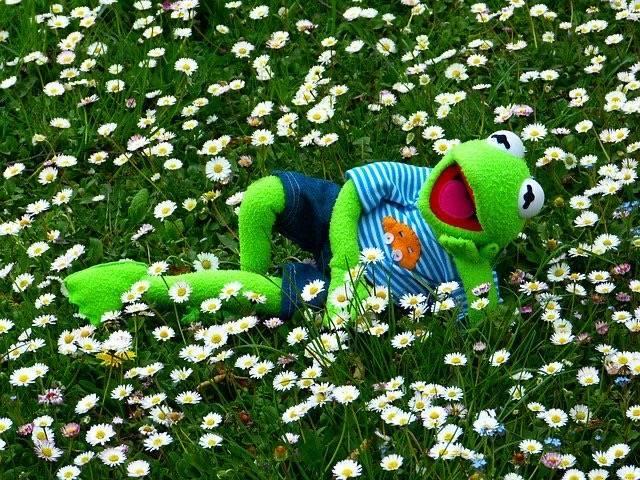 カエルの人形がお花畑でリラックスしている写真