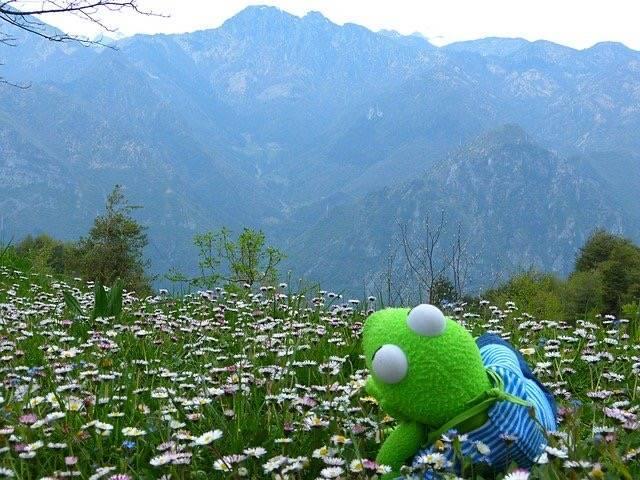 カエルの人形がお花畑で山を見てリラックスしている写真
