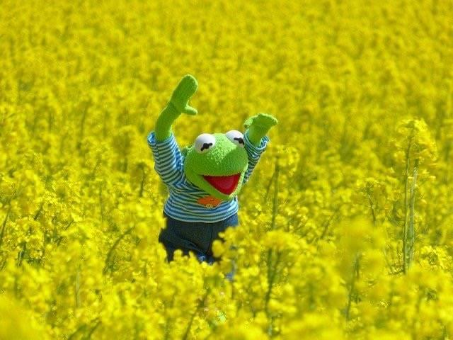 カエルの人形が菜の花畑で遊んでいる写真