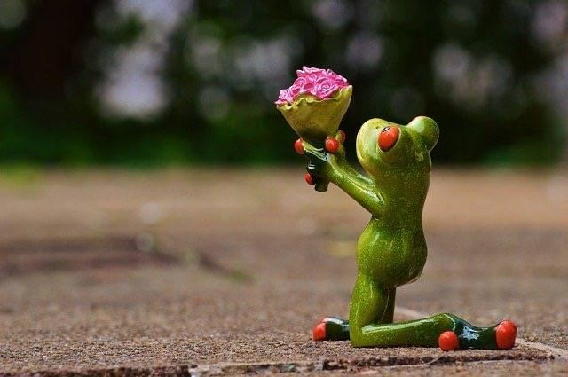 カエルが花束を差し出している写真