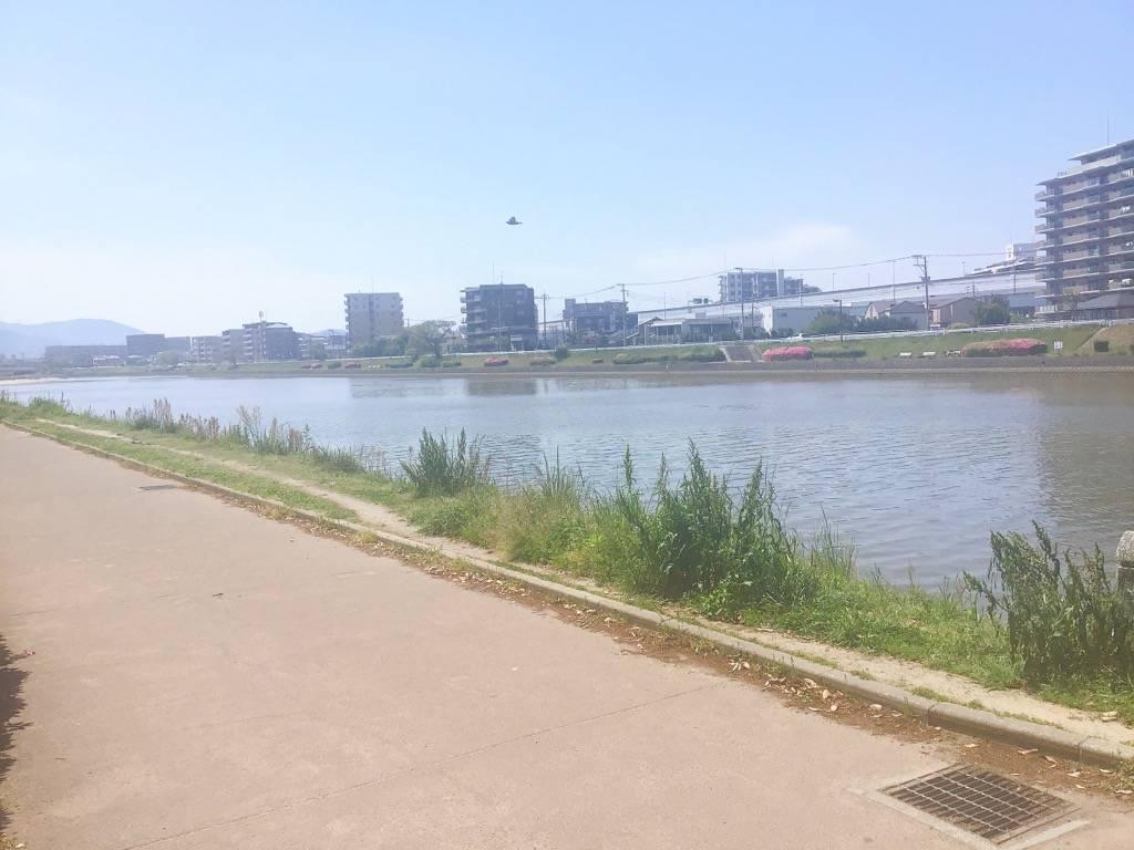 室見川 南側を向いて撮った写真