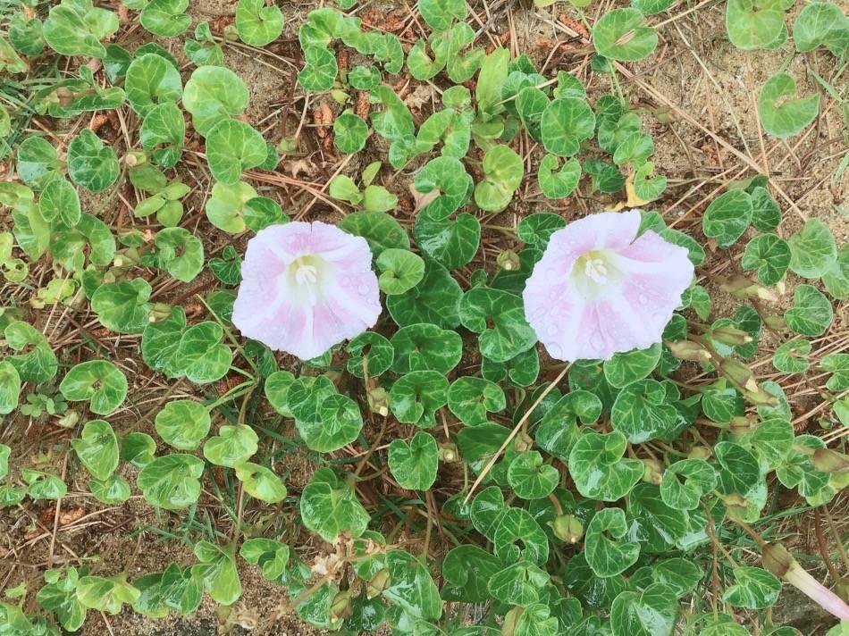 愛宕浜沿いに咲いていた花