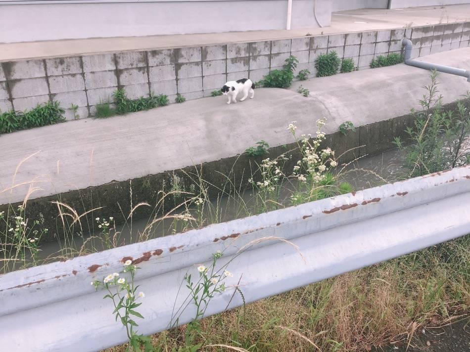 水路に猫ちゃん