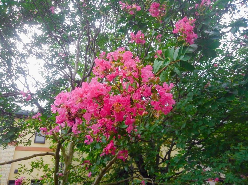愛宕通りの花