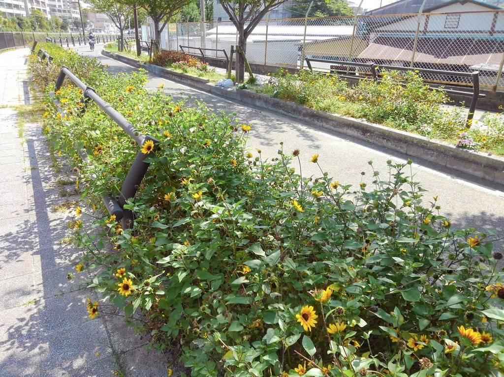 花が植えられている