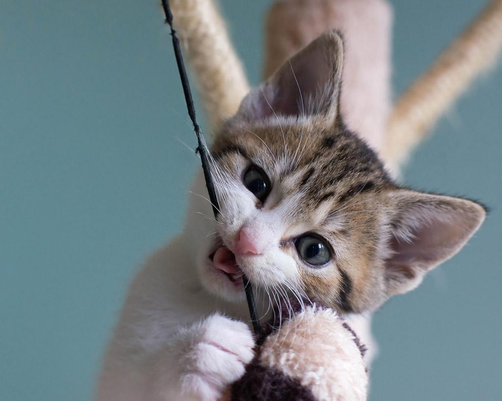 猫 噛む 理由