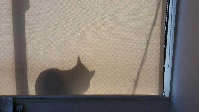 猫カフェ おすすめ