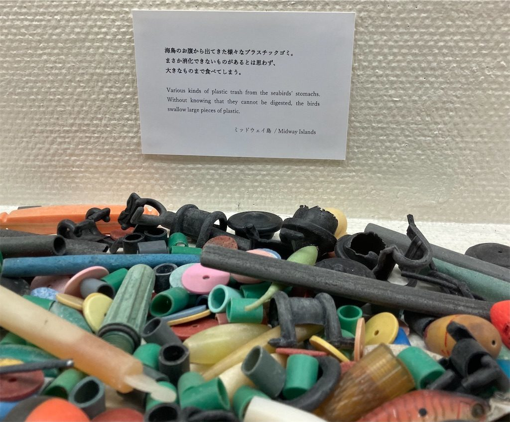 海鳥のお腹から出てきたプラスチックゴミが展示されていました
