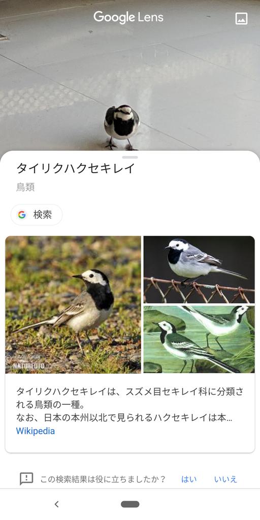 f:id:daruyanagi:20190104155716p:plain:w250