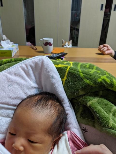 f:id:datsutokio:20200209115545j:image