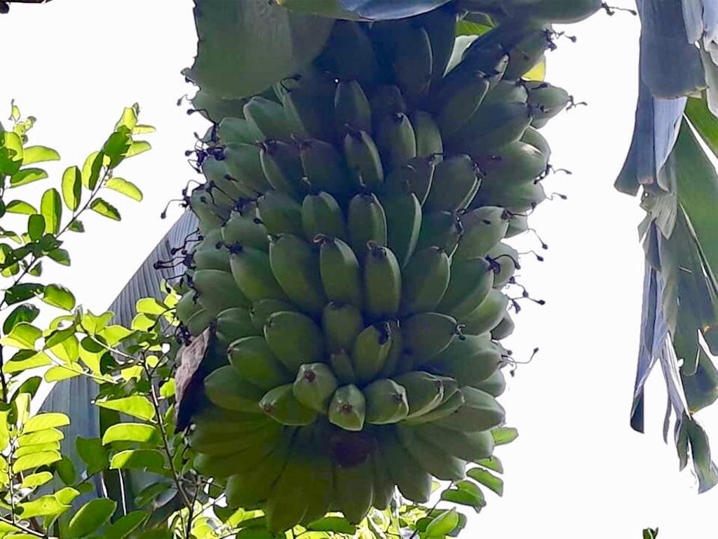 f:id:davaomania:20190427163057j:image