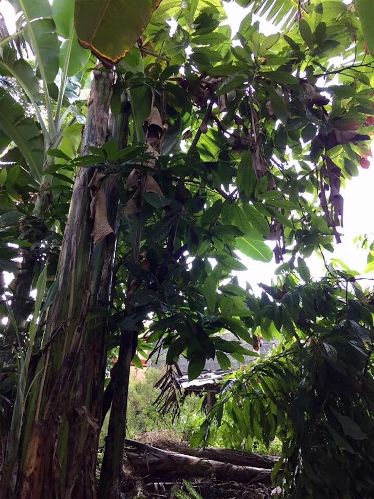 f:id:davaomania:20190614212652j:image