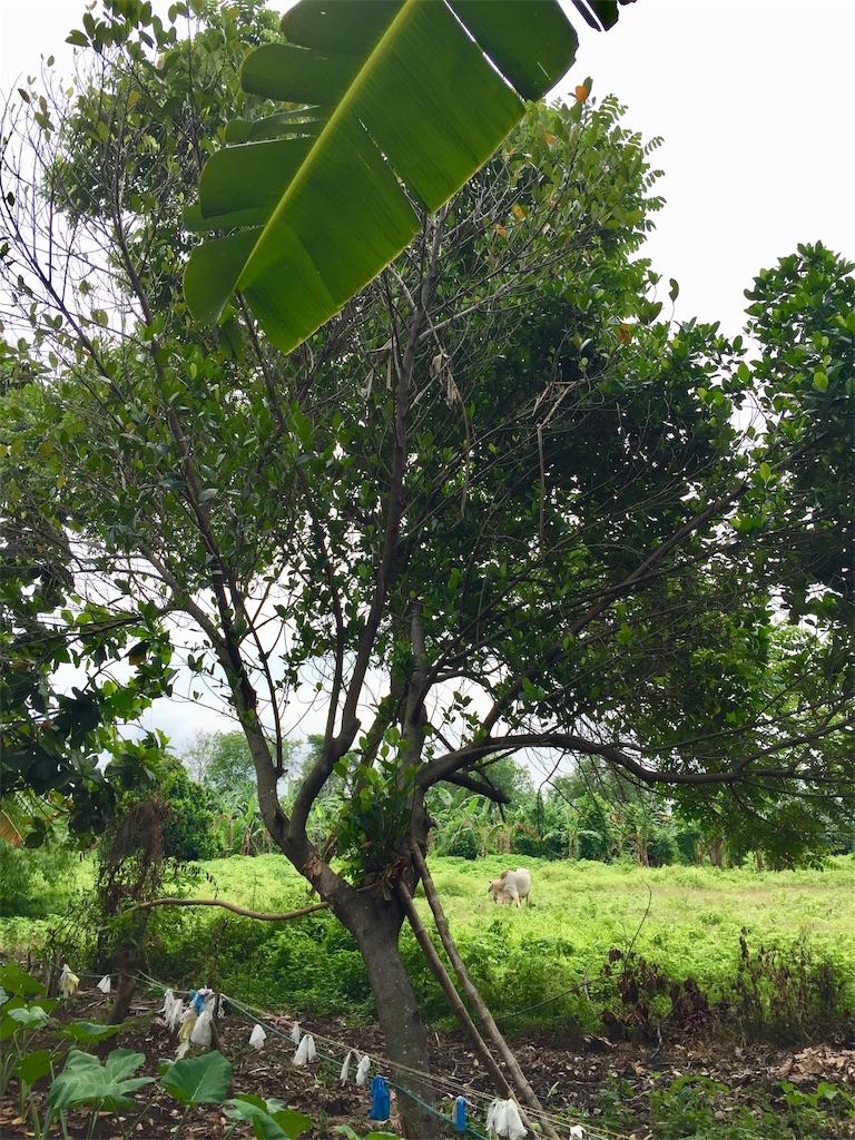 f:id:davaomania:20190629131605j:image