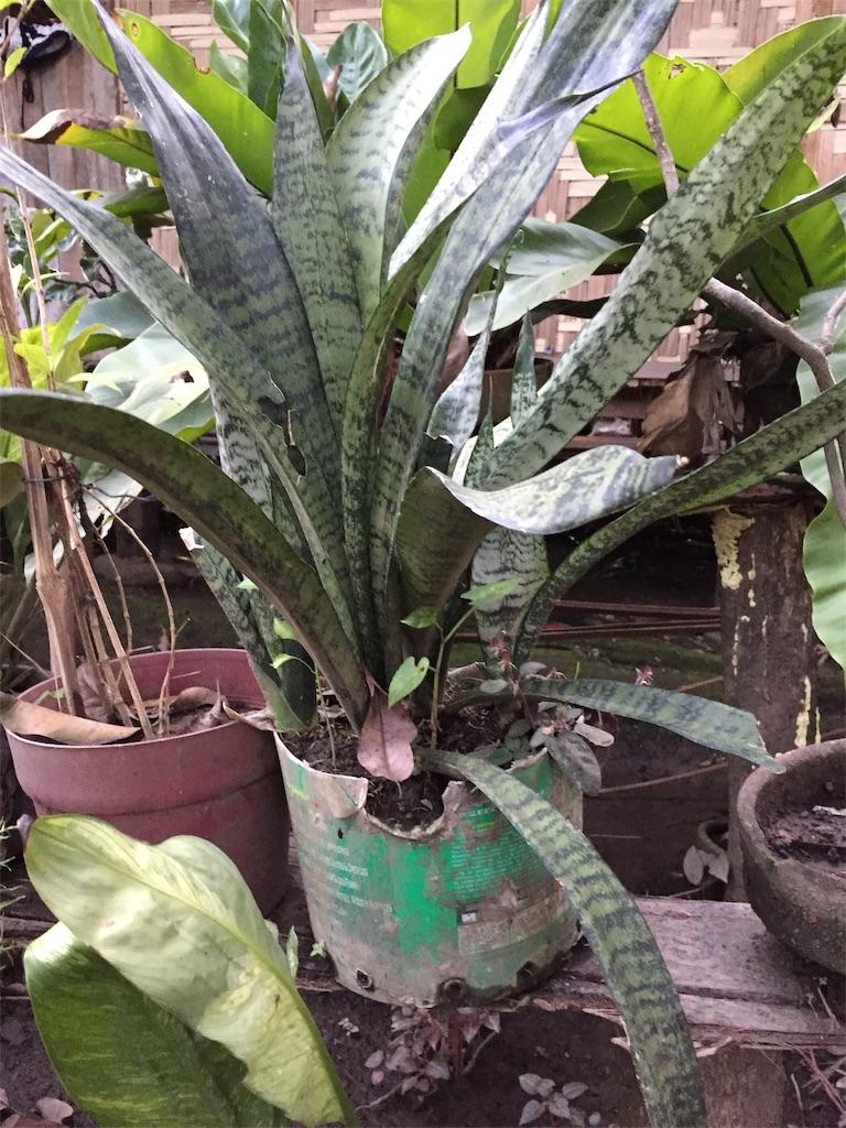 f:id:davaomania:20191207224343j:image