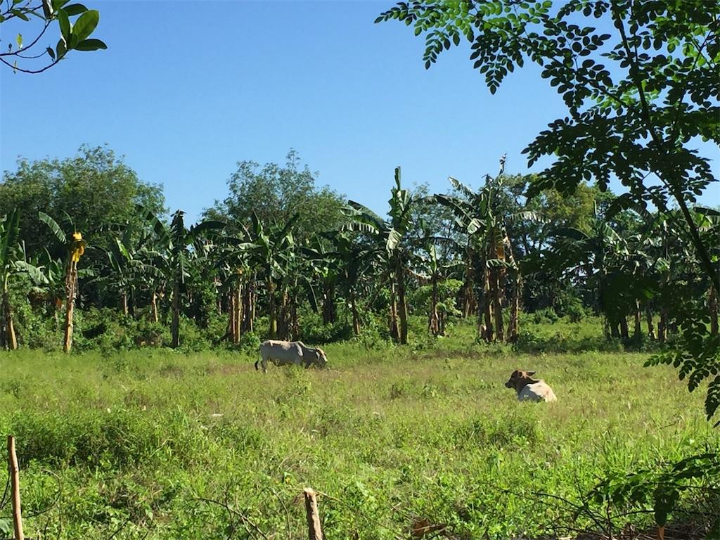 f:id:davaomania:20200526154412j:image
