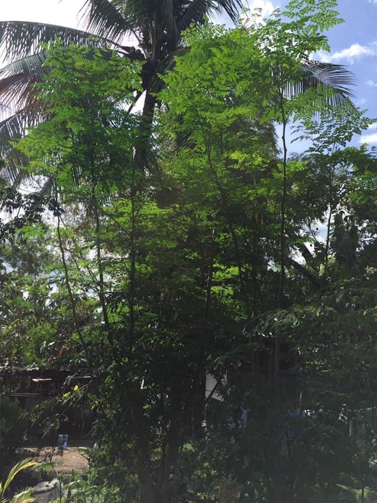 f:id:davaomania:20200630192131j:image