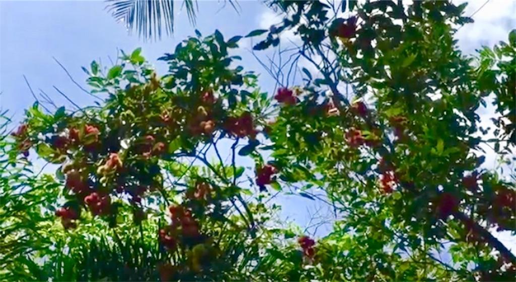 f:id:davaomania:20200821115646j:image