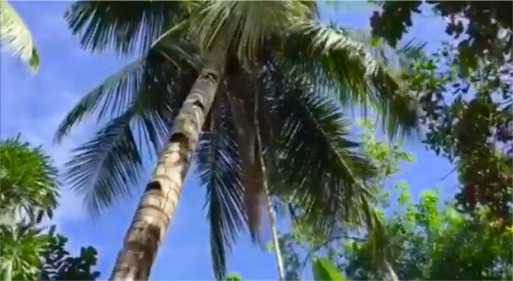 f:id:davaomania:20200901213941j:image