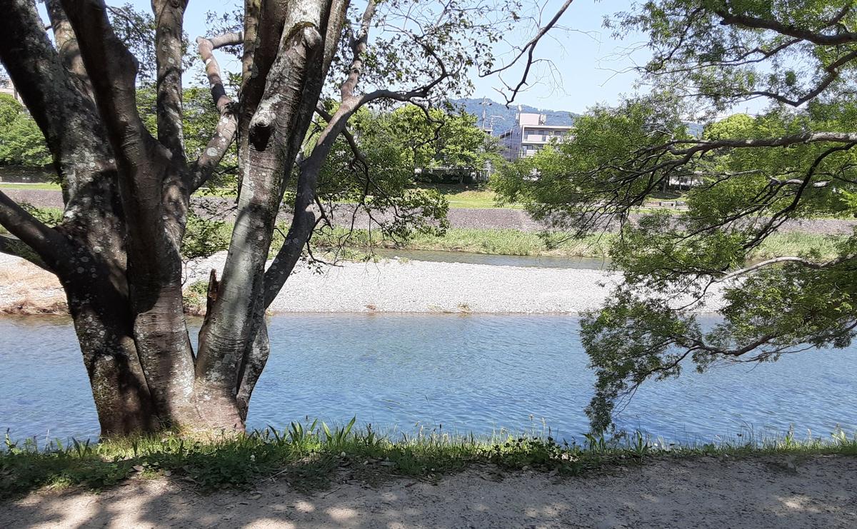 f:id:days-in-kyoto:20210601173618j:plain