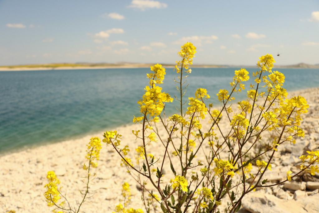 トルコの野の花