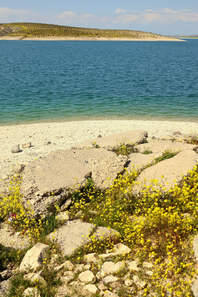 ユーフラテス川と野の花