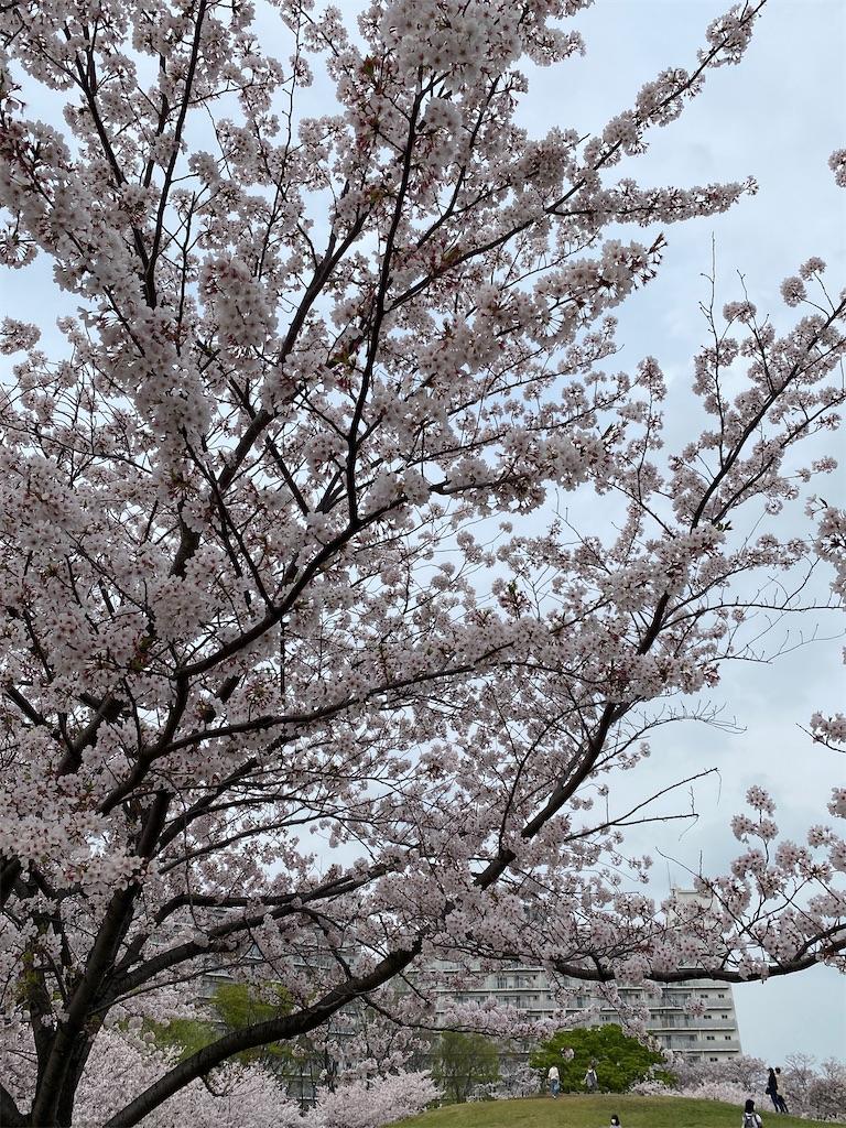 f:id:dayusan:20210330182843j:image