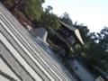 銀閣寺。2009春。