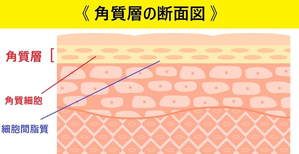 角質層の断面図