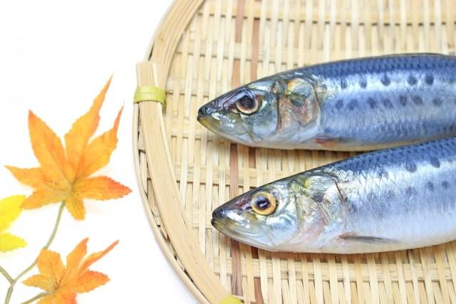 DHA EPAが多い青魚